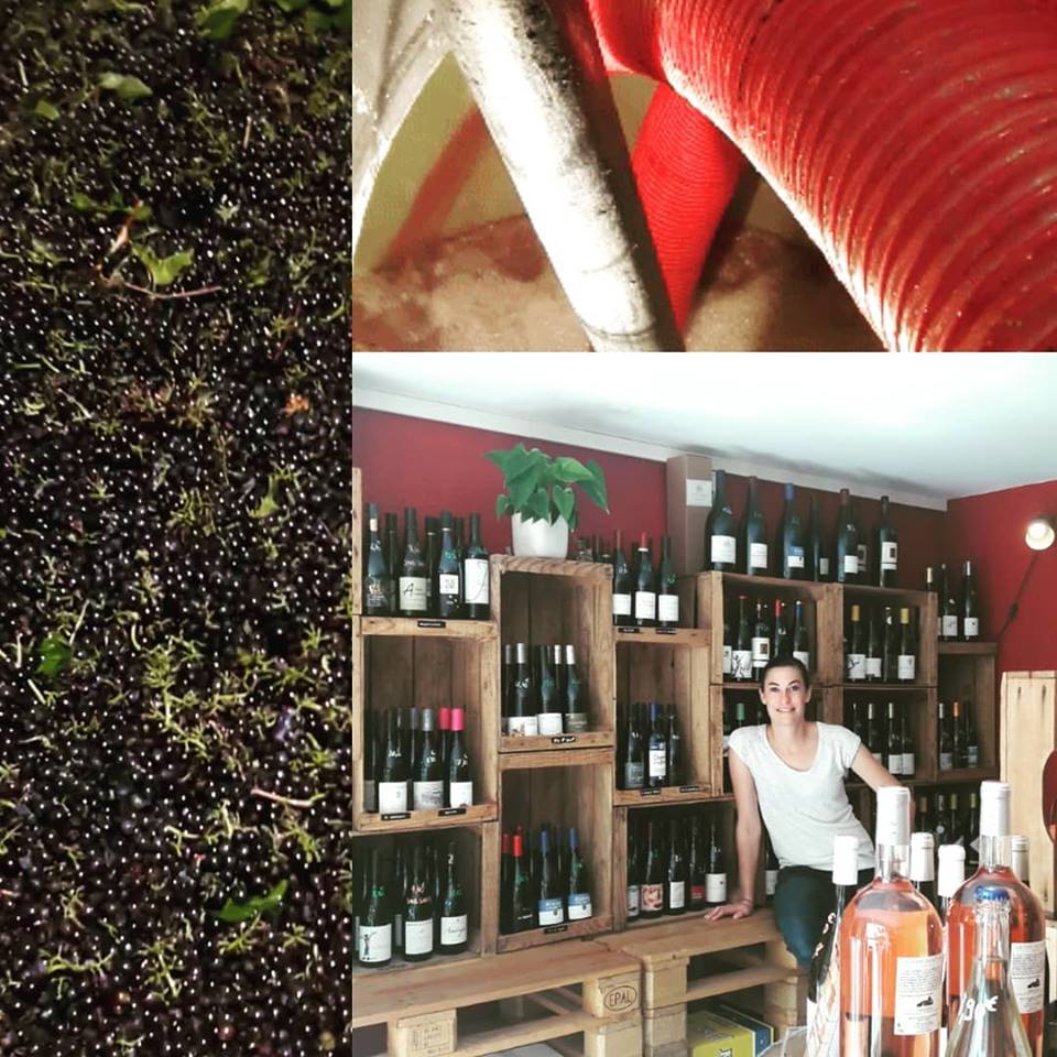 rentree vendanges vinifications nouveaux horaires caviste le petit chai cave a vin vins la grande motte bières whiskys rhums champagnes